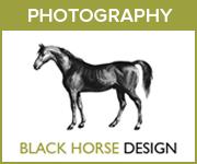 Black Horse Design Photography (Herefordshire Horse)