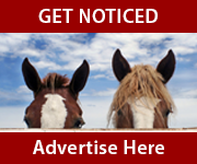 Get Noticed (Herefordshire Horse)